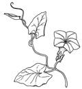 Illustraties voor zoekkaart 'Duinplanten', voor Stichting Veldwerk Nederland